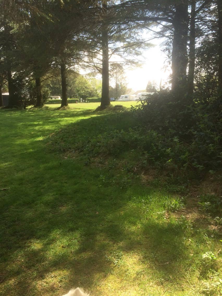 A tree-lined walk