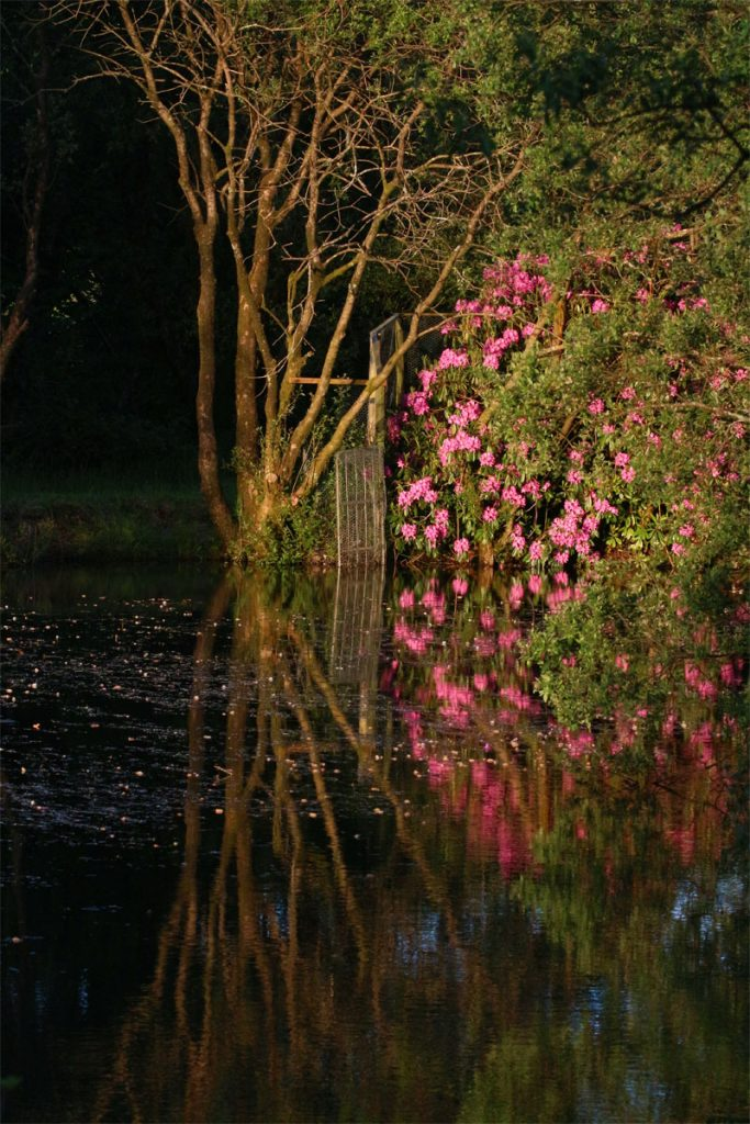 Pink reflections